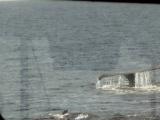 Whale tail 2008.JPG