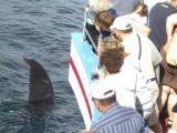 Whale watch 2008.JPG