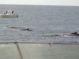 Whale watch Cape Cod 2008.JPG